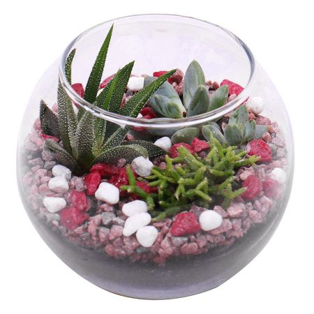 Product Quartet of succulents