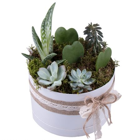 Bouquet Succulents in decorative boxes
