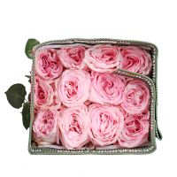 Wholesale Rose Ohara (Ecuador)
