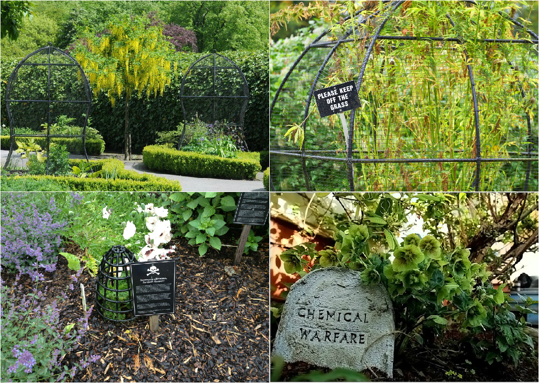 The Poison Garden Unusual Poisonous Plants