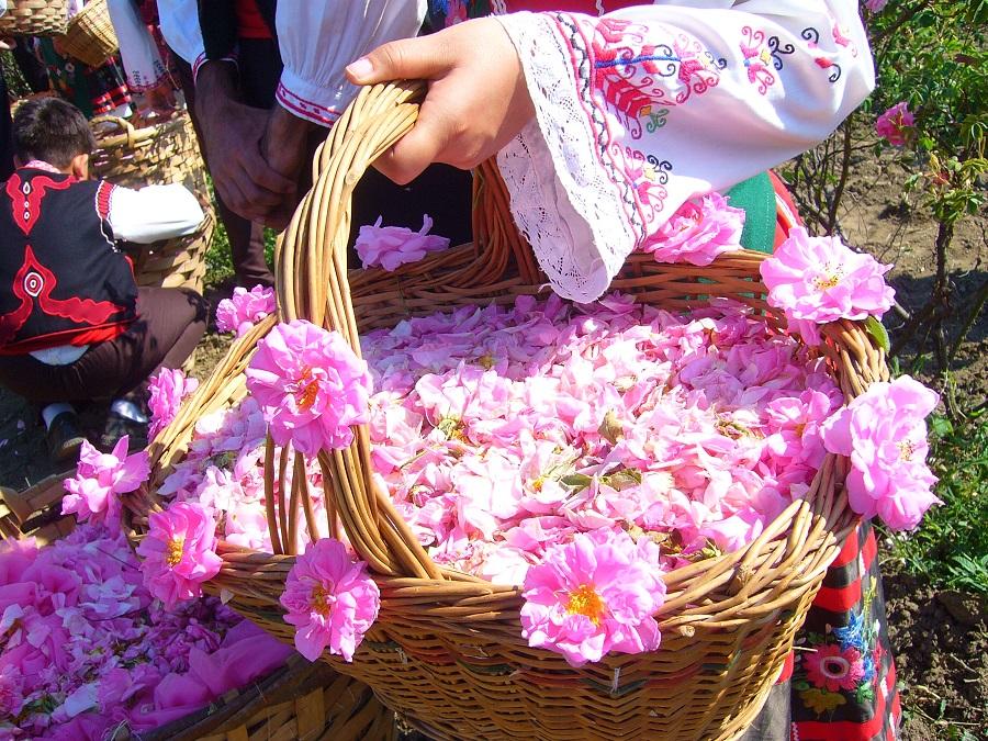 Flowers in Bulgaria